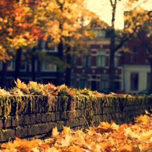 mùa thu xa nhớ